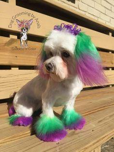 -repinned- Creative dog grooming for Mardi Gras