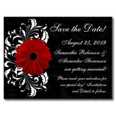 Red Black White Gerbera Daisy Save the Date Post Card