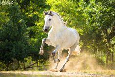 Paarden - Lisa Dijk Photography