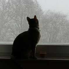 My Savannah girl likes to watch the snowflakes falling. #savannah #savannahcat #savannahkitten #kitten #cat #snow