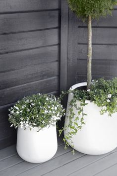 minimal white flower pots large big for flowers and trees , black and white porch garden. white flower pots large big for flowers and trees , black and white porch garden balcony white flowers Scandi minimal design Outdoor Flowers, Outdoor Planters, Outdoor Gardens, Outdoor Potted Plants, Fence Planters, Potted Trees, Hanging Planters, Porch Garden, Garden Pots