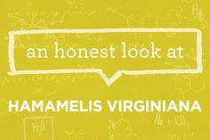 What is Hamamelis Virginiana? | via The Honest Company Blog