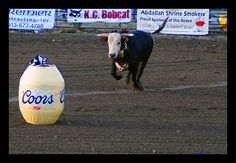 I think it's funny when the rodeo clown hides inside the barrel, and the bull goes strait to it.... i think that would be fun.