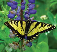Make your own butterfly garden | East Coast Living