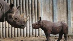 اجتماع دولي لمناقشة المخاطر التي تهدد وحيد القرن - المصريون