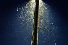 Long exposure of bugs under a street lamp
