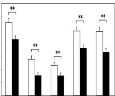 Anti-Fatigue Action of Peptides and Amino Acids Derived from Oyster on Healthy Subjects by Masaru Ohtani Food Engineering, Amino Acids, Health And Nutrition, Oysters, Action, Journal, Math, Healthy, Model
