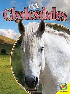 Clydesdale Gift Ideas for Clydesdale Horse Lovers - Just Horse Crazy!