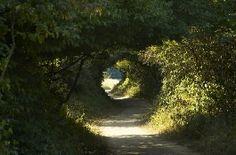 Kecske-hegyi séta