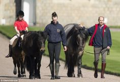Day out: Prince Edward (right) leads a horse around Windsor while his daughter Lady Louise follows on her pony.