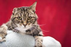 Tom Cat 11/18