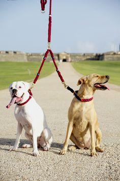 Walking two dogs at a time? The lasso splitter will make your walks easier in a stylish manner ;)