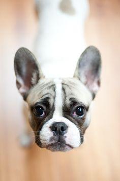 cute My freinds dog , sooo cute
