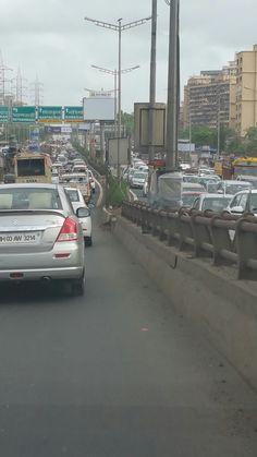Sunday Traffic Kandivali