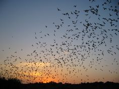 Placing a Dollar Value on Services Provided by Bats - Bats_Rule!