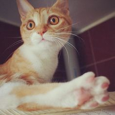 Cat feets!