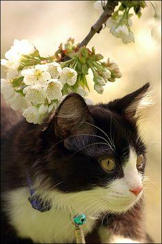 Cat & flowers...