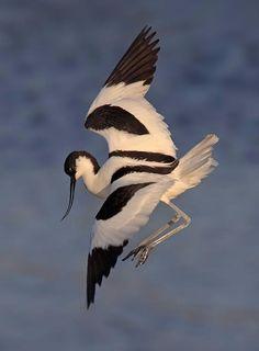 Птицы в полете.. Обсуждение на LiveInternet - Российский Сервис Онлайн-Дневников