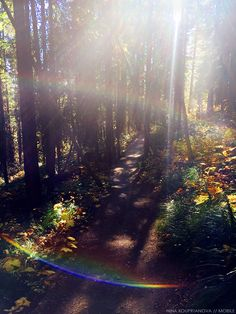 Kissed by the Divine.  #nature #hiking #woods #forest #rainbow #lights #outdoors