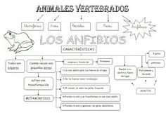 Anfibios Art Activities For Kids, Science For Kids, Science And Nature, Teaching Science, Life Science, School Items, Vertebrates, Reptiles, Kids Learning