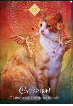 the Spirit Animal Oracle Deck Cat Spirit Animal, Animal Spirit Guides, Animal Meanings, Animal Symbolism, Pet Psychic, Psychic Readings, Power Animal, Angel Cards, Animal Totems