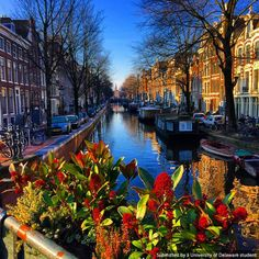 This view is so gorgeous, it almost does't look real!  Great shot of the canal by Alexa Alter in Amsterdam, Netherlands #UDAbroad