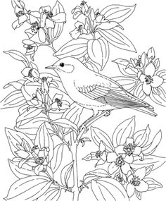 Click Mountain Bluebird And Lewiss Mock Orange Idaho Bird Flower Coloring Page For Printable