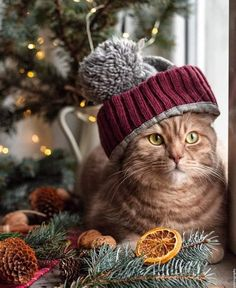 The Cat Grooming Brush - Sale! Cats Diy, Cute Cats And Kittens, I Love Cats, Christmas Animals, Christmas Cats, Xmas, Crazy Cat Lady, Crazy Cats, Cute Ginger