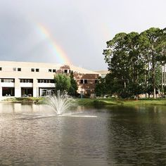 We #loveUNF for the top ranked academic programs & amazing professors! I guess the beautiful campus isn't so bad either... ☀️🌴🌺