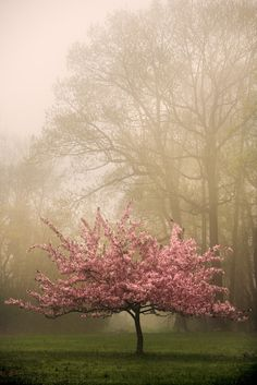 Blossom Bliss in a mist!