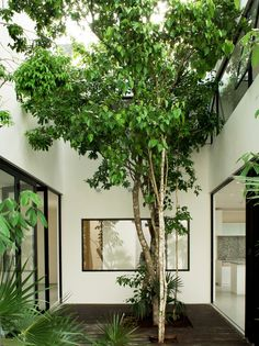 Warm architects | Casa W41 in Cancún, México [2011] | building around a central courtyard, defined by endemic plants such as Spanish lime tree & Chit palm trees | photography: Zaruhy Sangochian