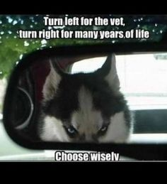 I read the GPS it said the vet you must be lost bacause if we go there only one of us is getting out of the car alive and huskies always win