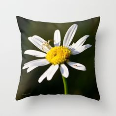 Tiny Daisy And Crab Spider Throw Pillow by Photography By MsJudi - $20.00