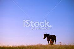 Girl And Horse Enjoying Nature Royalty Free Stock Photo