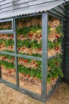 Strawberries Grown in Vertical Tiers.  I have to to try this some time.  Source - http://garden-photos-com.photoshelter.com/gallery-image/Small-Space-Vegetable-Fruit-Food-Gardening/G0000JHM_mKC4KR0/I00008ZXLieK0O0c