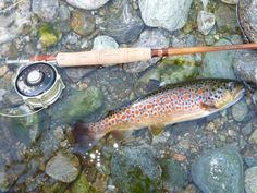 I love the spotting and coloration of some of the brown trout that come from Italian waters - much different from ours.