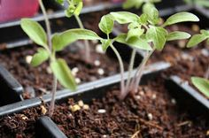The Educators' Spin On It: The Learning Garden - Starting Seeds Indoors