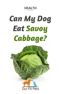 Can my dog eat savoy cabbage? Can my puppy eat savoy cabbage? Yes! Savoy cabbage can be a healthy addition to your dog's diet. Savoy cabbage can be cooked or fed raw to your dog. While cabbage is generally safe for dogs, there's something to keep in mind. Cabbage contains a compound called thiocyanate, which suppresses the thyroid gland.