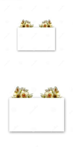 Photo about White spring flowers on top of a rectangular shape with shadow. Useful for invitation or greeting cards. Image of beautiful, blossom, flowers - 178459343 White Springs, Spring Flowers, Wedding Cards, Beautiful Flowers, Place Card Holders, Invitations, Shapes, Stock Photos, Gift Cards