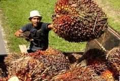 Industri sawit Indonesia dinilai memiliki prospek yang cerah untuk kedepannya karena permintaan akan produk kelapa sawit diprediksi akan meningkat dari tahun ke tahun. Oleh karena itu Kamar Dagang dan Industri (Kadin) Indonesia terus mendorong industri wawit dalam negeri agar terus dikembangkan secara berkesinambungan. Hal tersebut perlu dilakukan untuk dapat mewujudkan prinsip peningkatan produktivitas sebesar 20 persen,