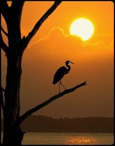 heron silhouette…
