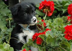 Perky Puppy            Submitted by: Annette Frederick