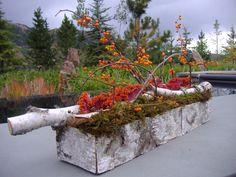 Garden Bark Box- The Aspen Branch Original- www.aspenbranch.com