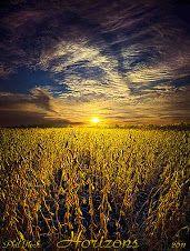 Definitely Soybeans in Wisconsin Photo by Phil Koch