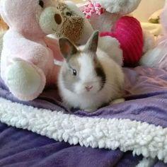 Baby bunny luke....