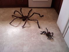 Scary spiders so cheap and easy ,,, you're gonna love them