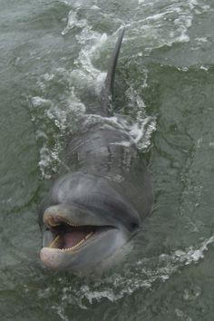 Hilton Head Island <3 dolphin