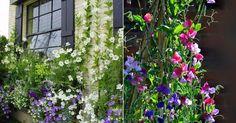 ELANGREEN nos muestra las flores más bellas que trepan por muros, paredes, columnas, verjas... ¡y todo lo que se nos ocurra =)!