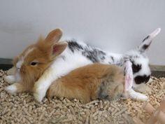 bun bunbun bun bunnies! so comfy!?