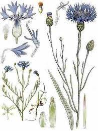 Синий цвет в сочетании с другими цветами 33